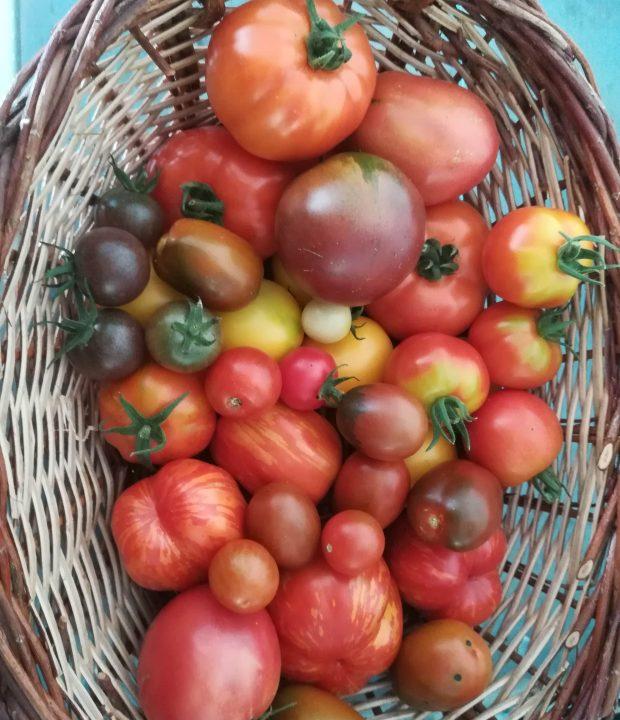 Tomaten-min
